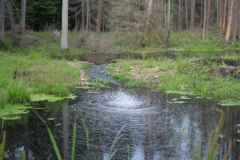 File:Nature reserve Góra Pieszczana 03.jpg