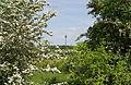 Naturschutzgebiet Hainberg Mittelfranken 010.JPG