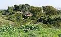 Nes-Ziona-Kurkar-Hills-029.jpg