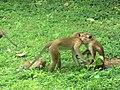 New Town, Polonnaruwa, Sri Lanka - panoramio (3).jpg