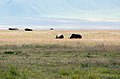 Ngorongoro 2012 05 30 2719 (7500960918).jpg