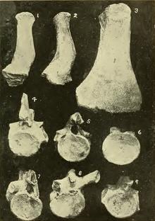 Black and white photo of various bones