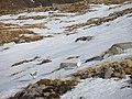 Northwest ridge, Fuar Bheinn - geograph.org.uk - 731367.jpg