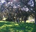 Oakmont Park, Shadows 2-17-13 (8536510685).jpg