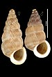 Cochlostoma apricum - Photo (c)   Gargominy O.,  זכויות יוצרים חלקיות (CC BY)