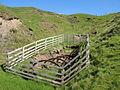 Old mine level near Sedling Burn - geograph.org.uk - 1449697.jpg