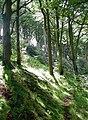Oliver's Mount Plantation - geograph.org.uk - 926364.jpg