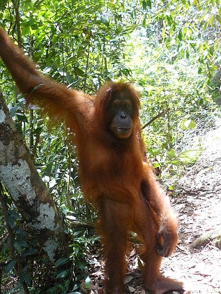 go: on a Jungle trek