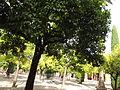 Orange Tree Courtyard (14602922998).jpg