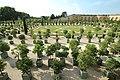 Orangerie du château de Versailles le 11 septembre 2015 - 89.jpg