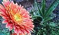 Orenge flower.jpg