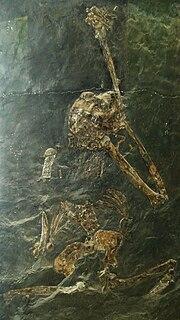 <i>Oreopithecus</i> Extinct genus of hominid from the Miocene