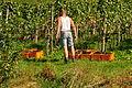 Ossingen - Wümmete 2011-09-26 13-35-32.JPG
