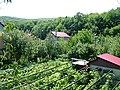 Over the vineyard - panoramio.jpg