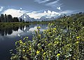 Oxbow Bend outlook in the Grand Teton National Park Edit.jpg
