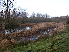 Oxbow lake, Low Butterby, near Durham - geograph.org.uk - 95535.jpg