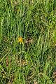 PR Hluboký rybník 29.jpg