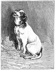 PSM V50 D101 Fox terrier laughing.jpg