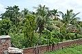 Palms in Nepal! (9258088071).jpg
