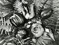 Paolo Monti - Servizio fotografico (Anzola d'Ossola, 1963) - BEIC 6362339.jpg