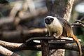 Parc Zoologique de Paris, 5 April 2014 (17).jpg