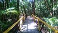 Parque Municipal do Mindu, localizado no coração de Manaus.jpg