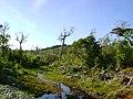 Parque Nacional Chiloé-Sendero El Tepual.jpg