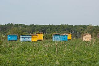 Včelíny