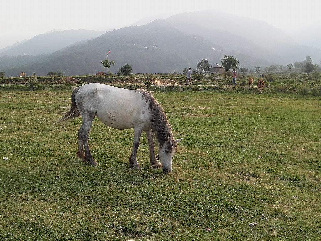 Pasture Land of Bir, himachal Pradesh