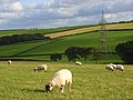 Pastures, Newton Tracey - geograph.org.uk - 964763.jpg