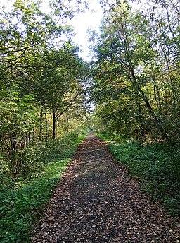 Path in Uffmoor Wood - geograph.org.uk - 1544013