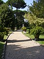 Path through the Garden in Vatican City.jpg