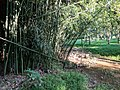 Patuxent River State Park 45.jpg