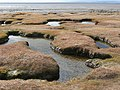 Peat pools near Red Bank, Bolton le Sands - geograph.org.uk - 1754736.jpg