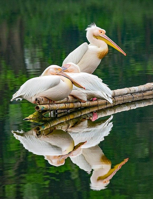 Pelican Safari Park.jpg