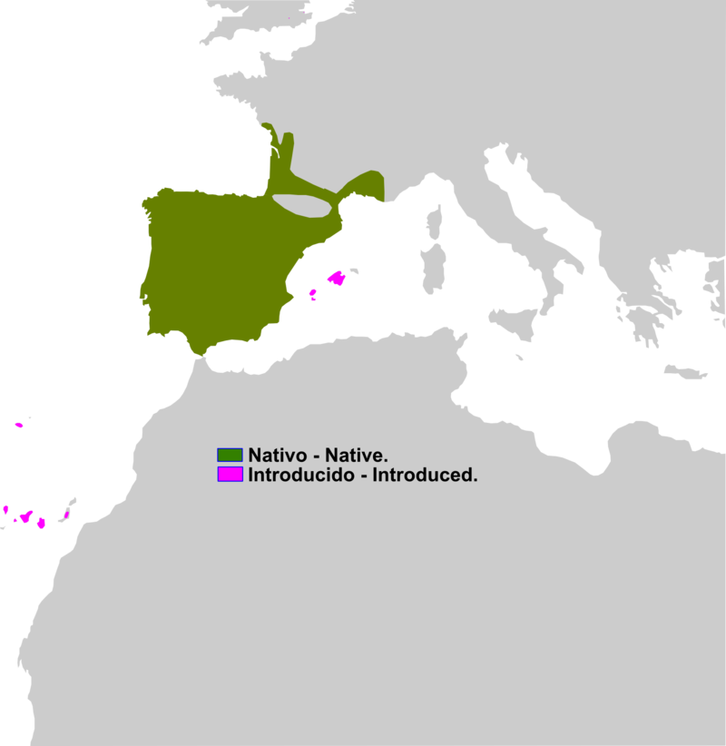 Pelophylax perezi range Map.png
