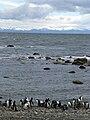 Penguin Beach.jpg
