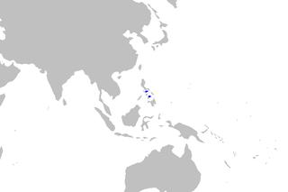 Gnetum macrostachyum - WikiMili, The Free Encyclopedia
