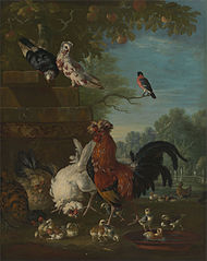 Domestic cock, hens, and chicks in a park