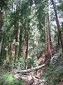 Pfeiffer Big Sur State Park1.jpg