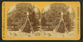 Picking oranges in a grove, by W. H. Cushing.png