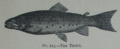 Picture Natural History - No 213 - The Trout.png