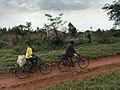 Pig carried on a motor bike-Uganda.jpg