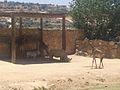 PikiWiki Israel 17292 JERUSALEM VIEW.jpg