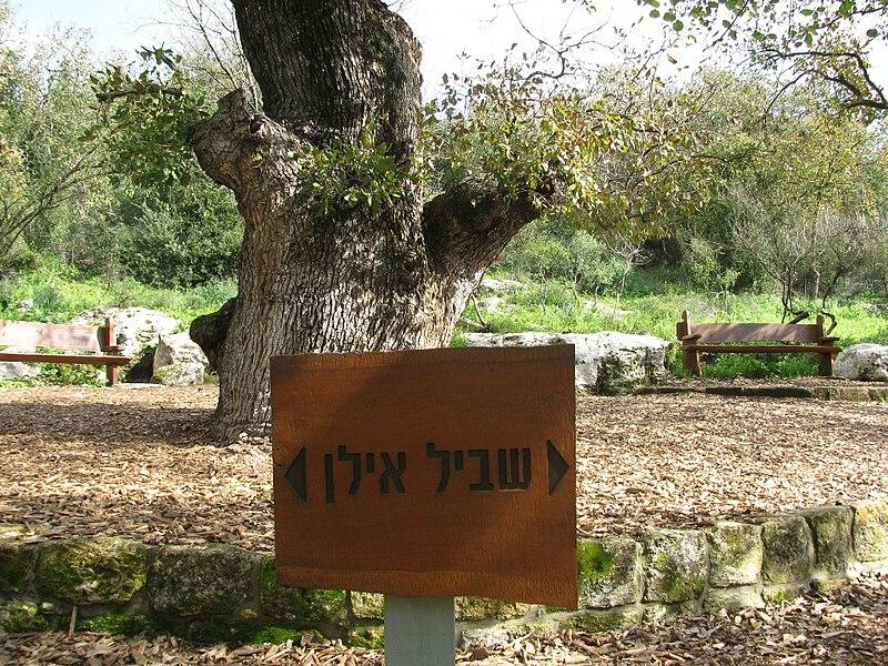 אתר עץ האלון בטבעון