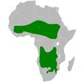 Pinarocorys distribution map.png