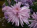 Pink swords (4713890835).jpg