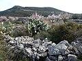 Pinos-Marnes Sella de Cau hike (26880730336).jpg