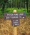 Pitch Pine Loop Trail (7) (21035124418).jpg