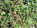 Plant, from Rize DSC06936.JPG